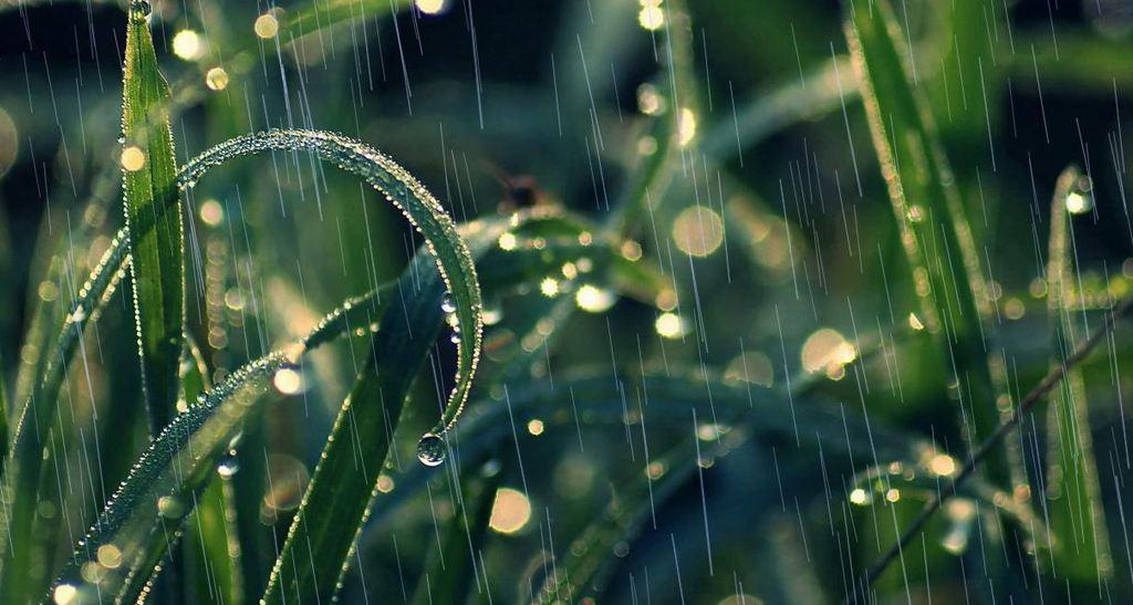 二月二:仲春遘时雨,东方苍龙现