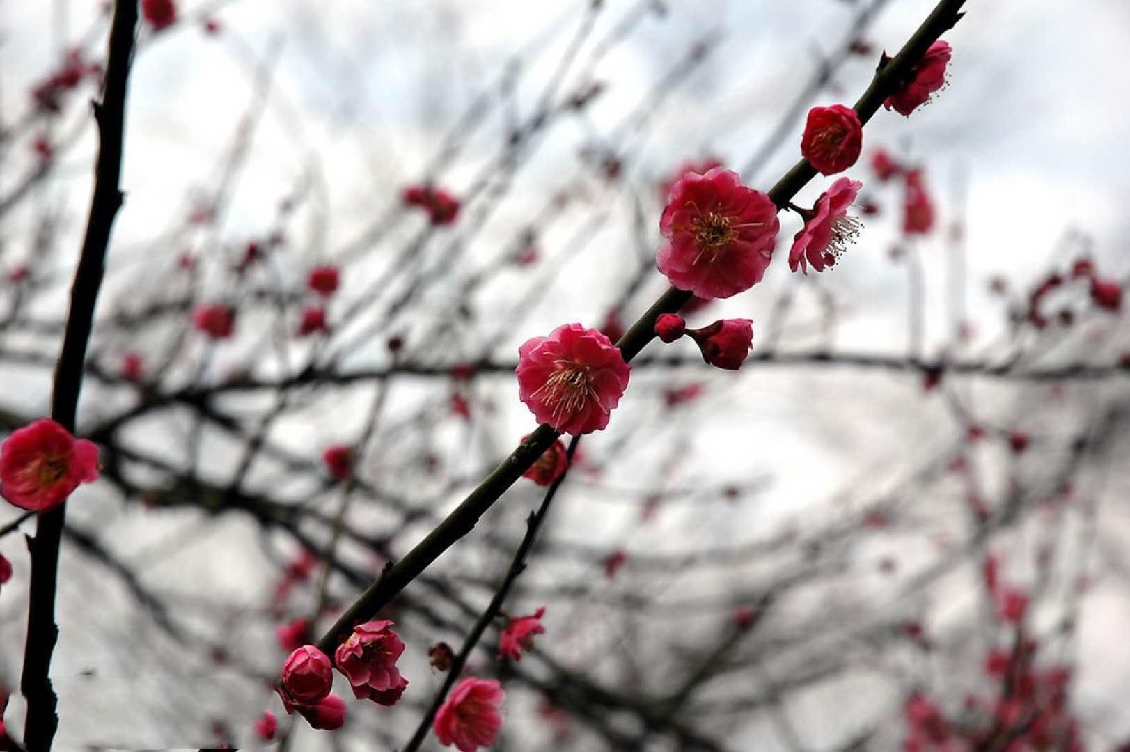 读经明义丨《礼记·月令》:孟春之月的物候风俗