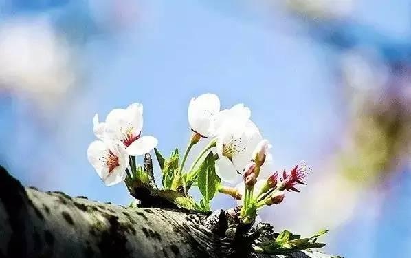 林语堂:人生如诗 有自己的韵律和拍子