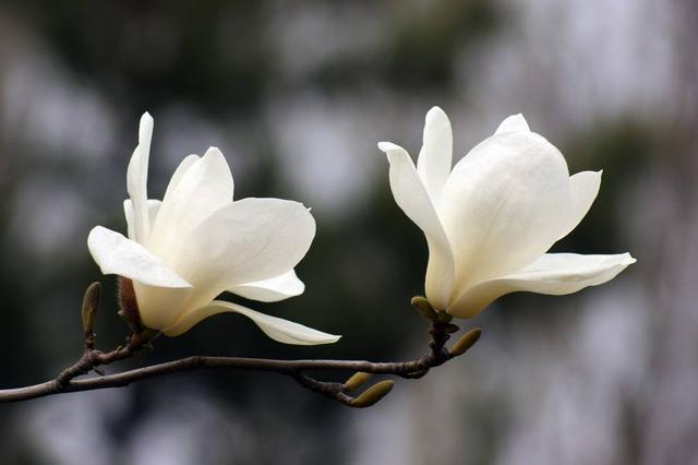36、王重阳与全真教:王重阳祖师预知未来的神功