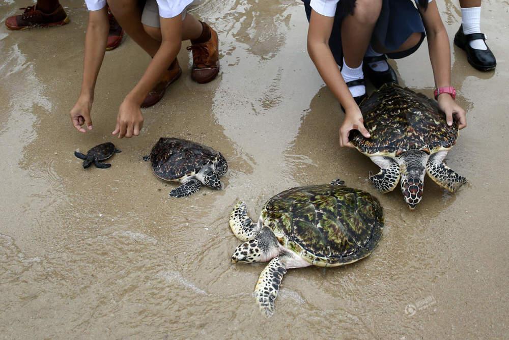 泰王65岁生日 民众放生千只海龟