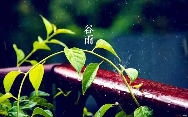 谷雨 即将告别春天