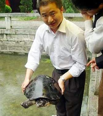 放生千年龟