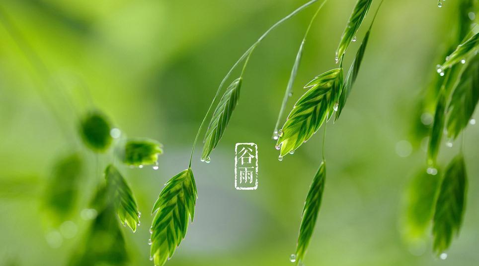 道医养生笔记丨谷雨养生有两般 南要祛湿北滋润