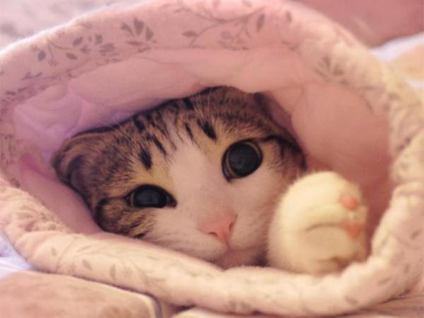 """鸡犬升天之时,""""猫独不去"""",那么猫去了哪里?"""