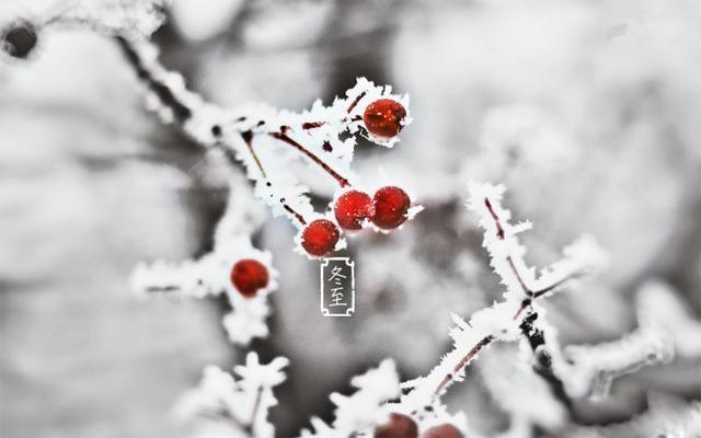 冬至一阳生 道医告诉你鲜为人知的进补宜忌