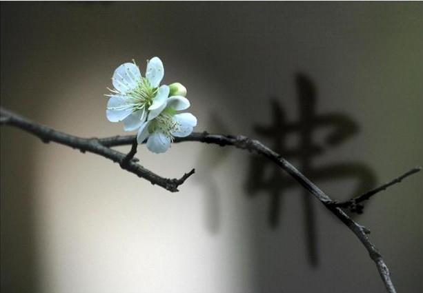 大安法师:诗中的极乐净土(8)