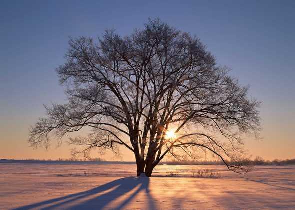 阴阳在天地之间交舞:自然世界中的五行