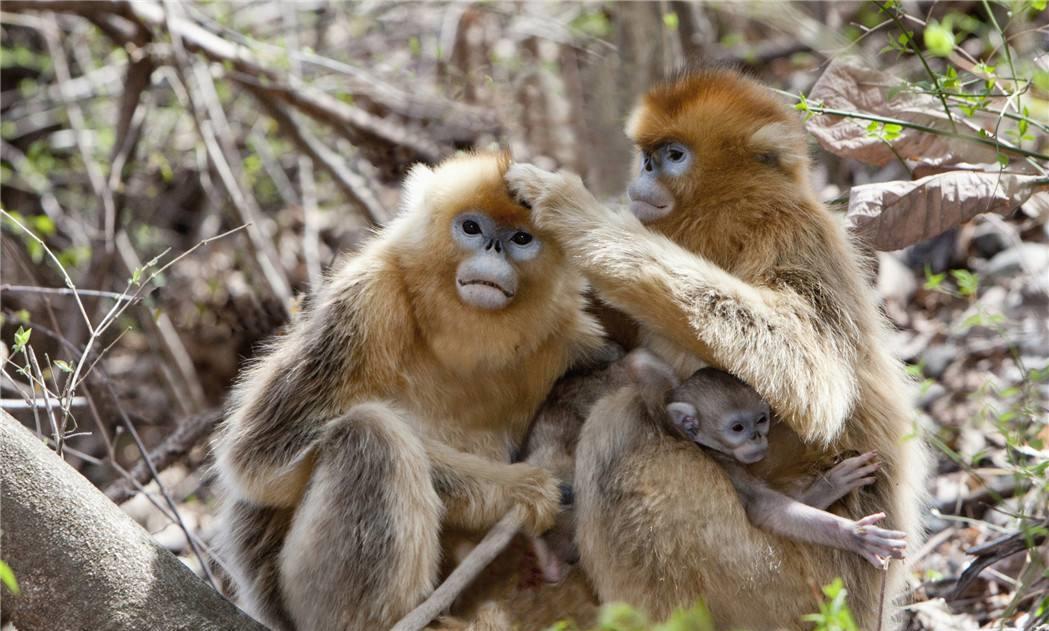 2019年十二生肖运势逐个看:猴篇
