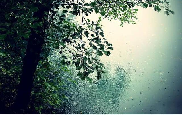 我是雨 他是杜甫
