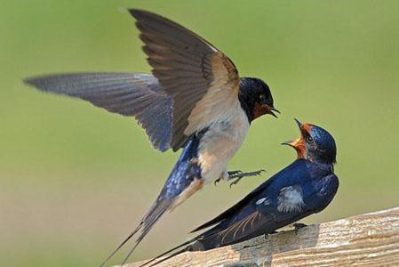 春分:昼夜平分 燕燕于飞