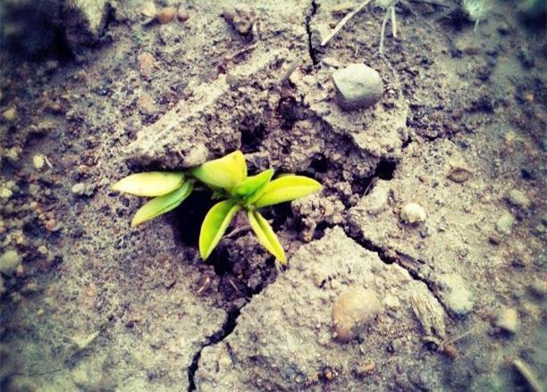 读经明义丨《春秋》:见微知著 绝乱塞害于未行之时