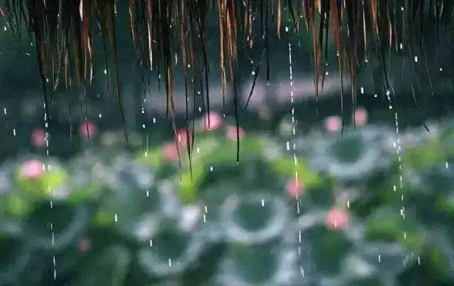 芒种:时雨及芒种,四野皆插秧