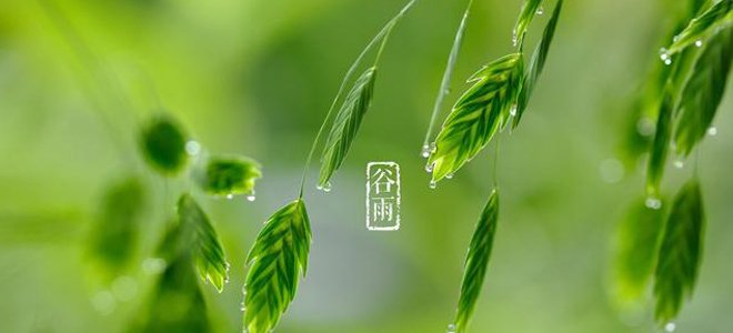 谷雨:春将远渐远 夏将至未至