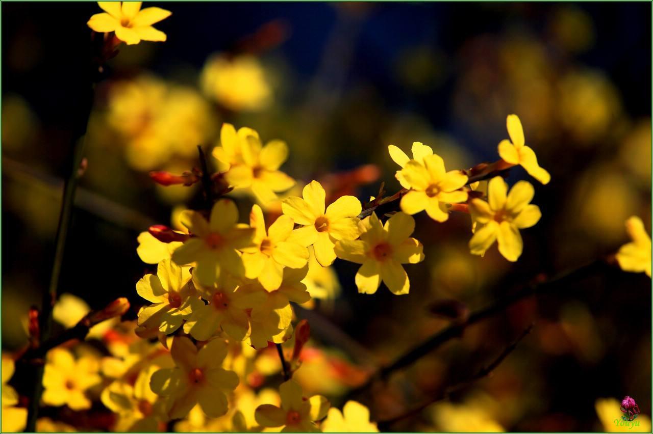 立春:春至人间花木知 万物春回孕新生