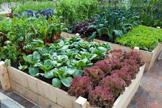 春季宜吃素:十蔬菜养肝排毒又瘦身