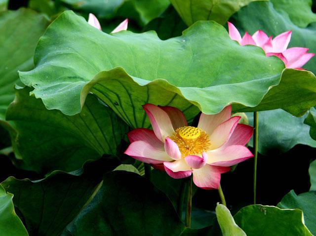 心静自然凉:在古诗文中寻找避暑良方