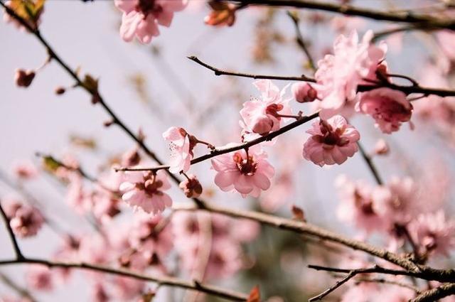 每周诗语丨花中君子:不要人夸好颜色 只留清气满乾坤