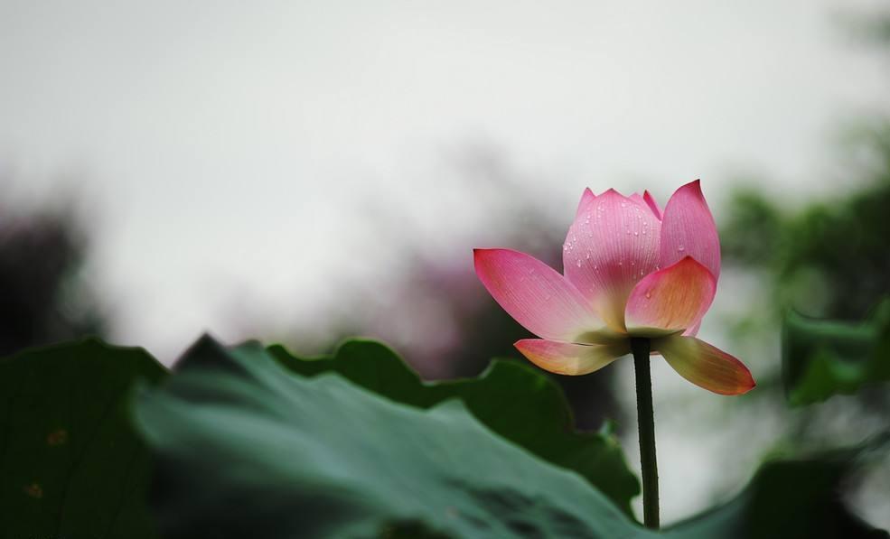平和:大化无形的暗香 人生幸福的源泉