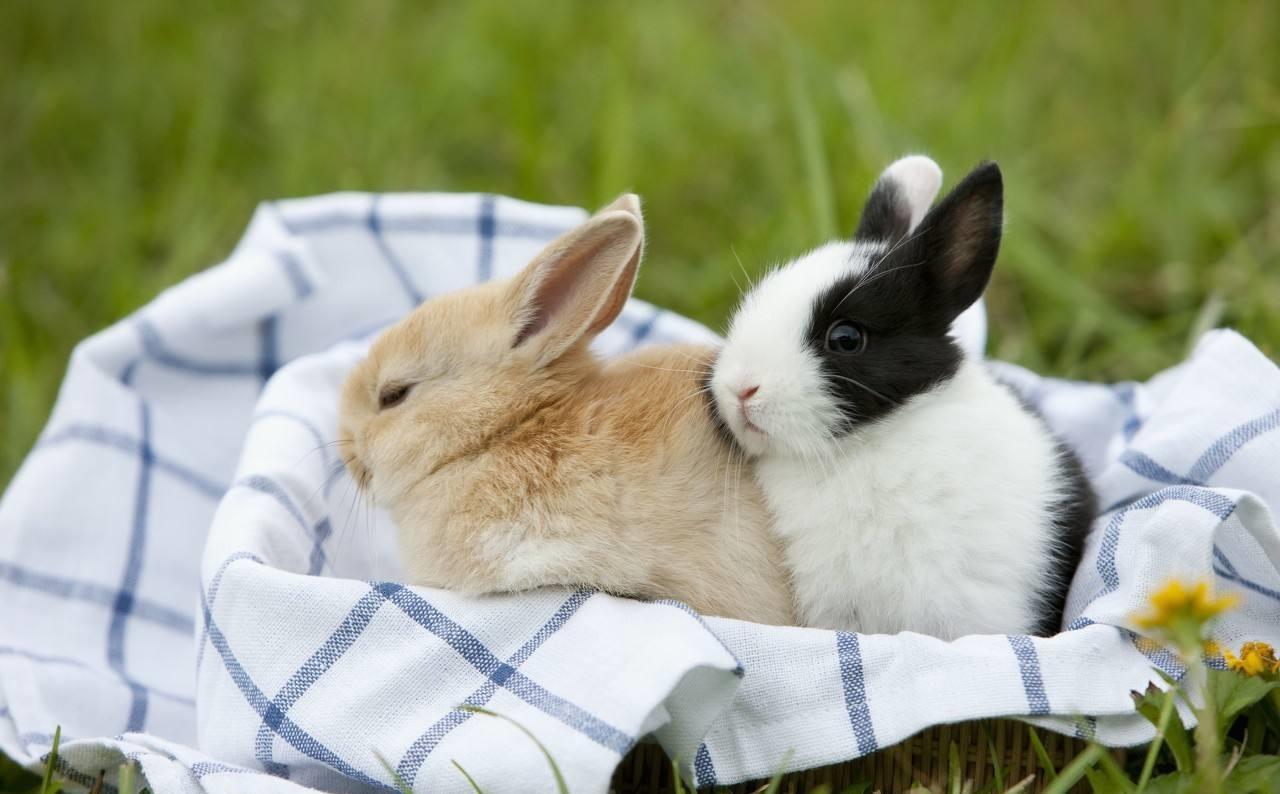 2019年十二生肖运势逐个看:兔篇