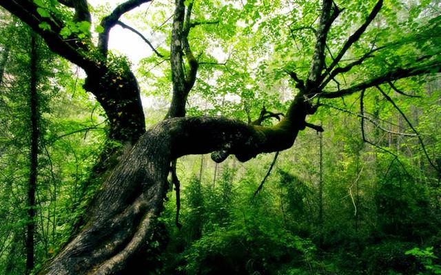 林间开荒怪事:山林精怪亦许自新,神将岂为私欲所遣