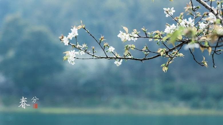 道医养生笔记丨春分:赤道金阳直射面 白天黑夜两均分
