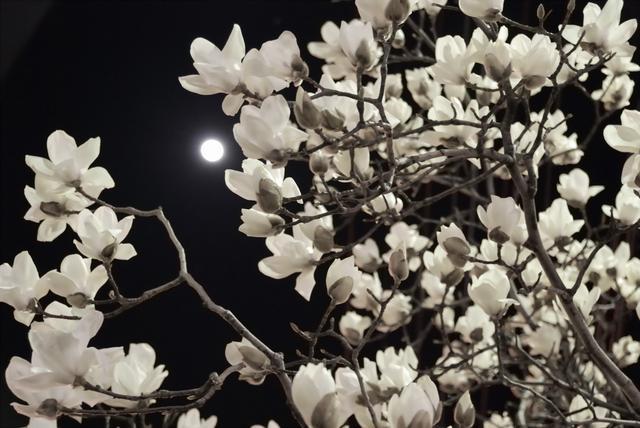中秋思乡:亲爱的家人 月亮代表我的心