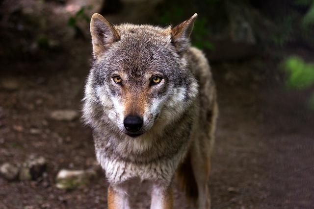 我们所有的邪念 终会化成吞噬自己的恶狼