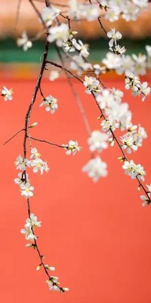 紫禁城里那些中国最美的颜色