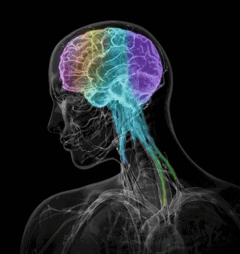 复杂的人脑(资料图)
