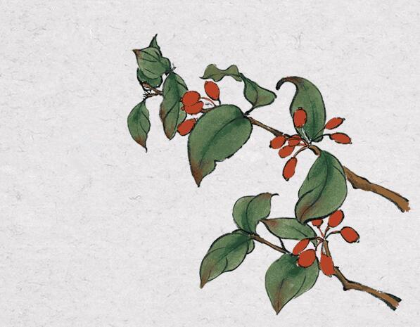 登高、赏菊、插茱萸,说说这些重阳节习俗的道教背景