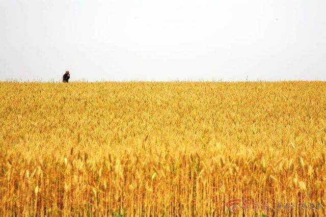 从佛法角度看《白鹿原》中仁、智、勇