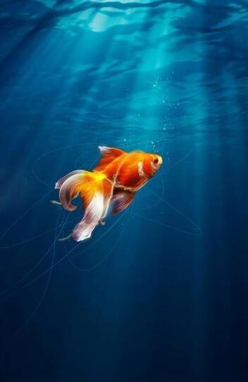 组图:鱼跃龙门好运来 结得新岁福气生
