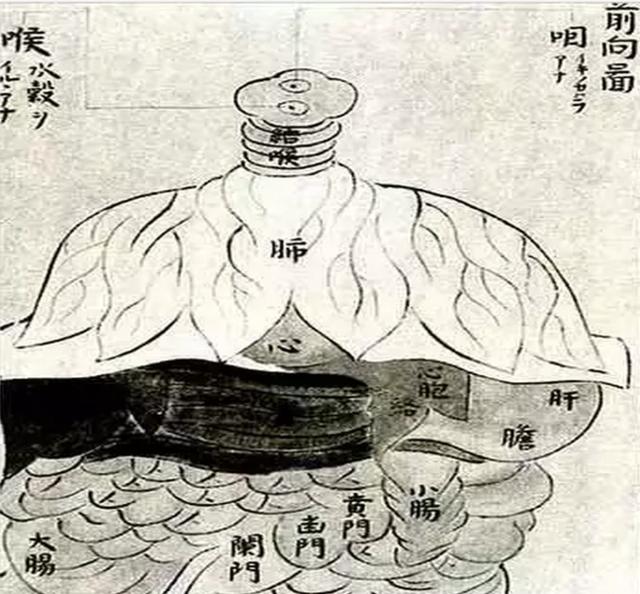 《顿医抄》的人体解剖图(资料图)