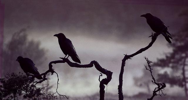 安心法语——乌鸦的啼声