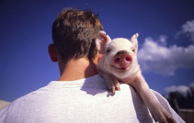 即便不吃素 我们也该让这个世界少些残忍