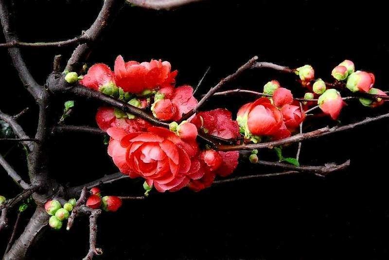 《诗经·南山有台》:寿比南山的祝祷词