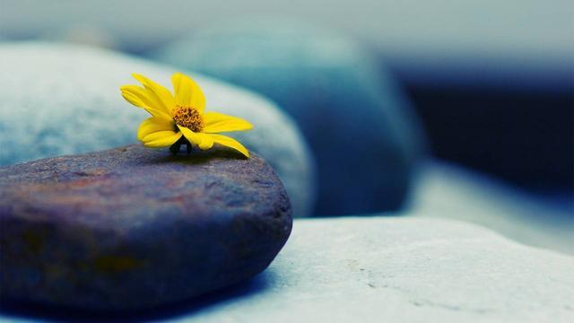参禅不是追寻外在的高峰 而是回归自我