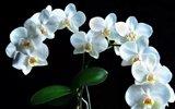 珍稀兰花:风来难隐谷中香