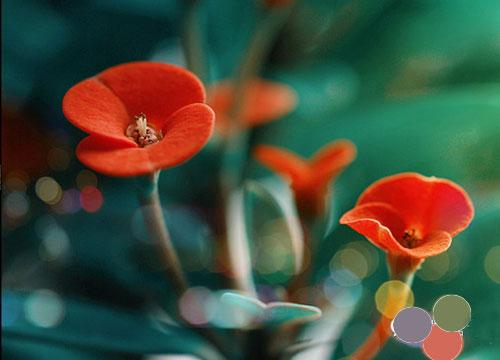诗词之美:诗的色彩美