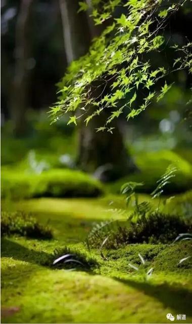 观一抹苔绿,意韵苍古,便得山林隐逸