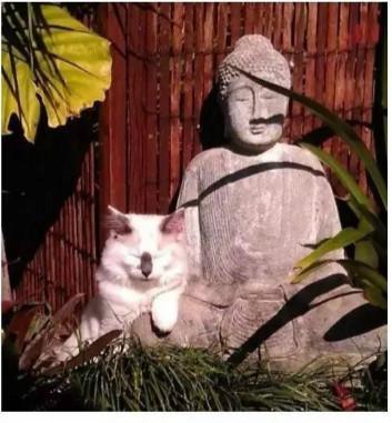 当喵星人遇见佛陀 除了迷之萌点 还有你想不到的!