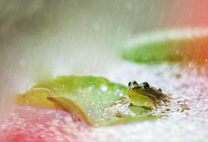 听,诗中有只蛙在叫!