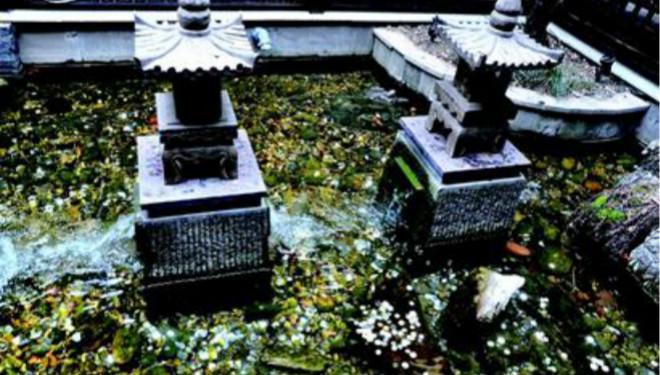 观景池被当许愿池 寺院提醒:祈福乱投币无意义