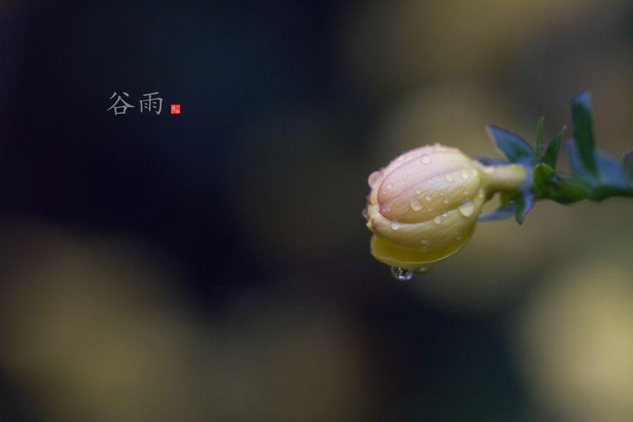 道医养生笔记丨谷雨时节暮春尽:春季养生要点大回顾