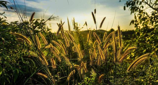 读经明义丨荀子:精于道者 善兼物物