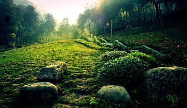 双生花种植日记:儒道并行下,看人与自然