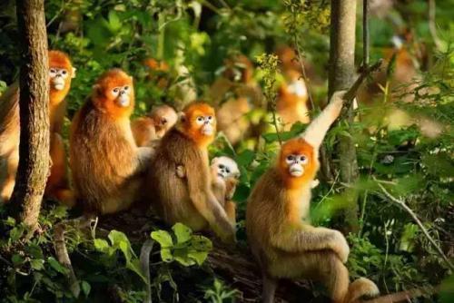 漫谈洞天福地:生命物种的基因库