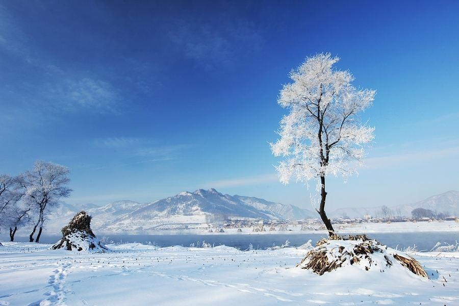 道医养生笔记丨大寒,流感需注意冬温之毒与伤寒大异