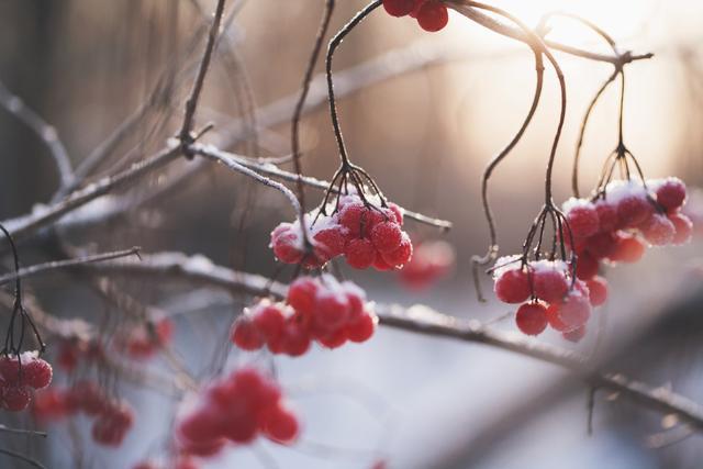 冬至阳生春又来:阳气不足吃什么?